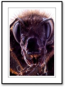 bumble-bee_051