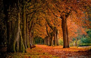 276578-11-autumn-colors-in-the-forest